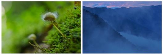Links: Dobrocsky, Slowakei: Mini-Urwald am Boden Rechts: Abendnebel im Radurschltal, Tirol: In den wilden Zirbenwäldern stehen monströse Baumveteranen. (c) Matthias Schickhofer; Brandstätter